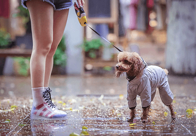Doggie gray raincoat