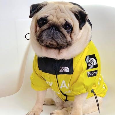 Dog windbreaker raincoat