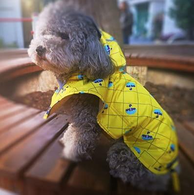 reflective dog poncho