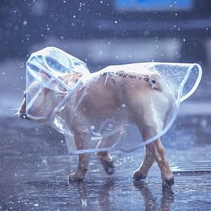 Small dog transparent raincoat